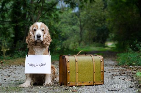 Down Duvet Cover Dog And Suitcase Photograph By Mats Silvan