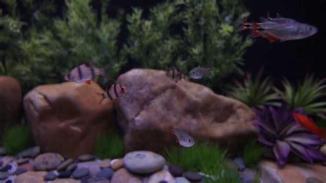 http www current satellite freshwater led current usa led aquarium light