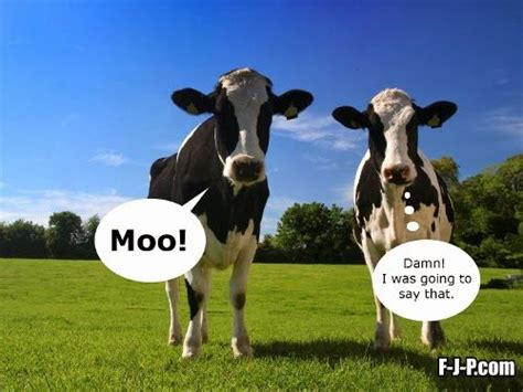 Moo Meme - funny two cows moo meme joke picture funny joke pictures