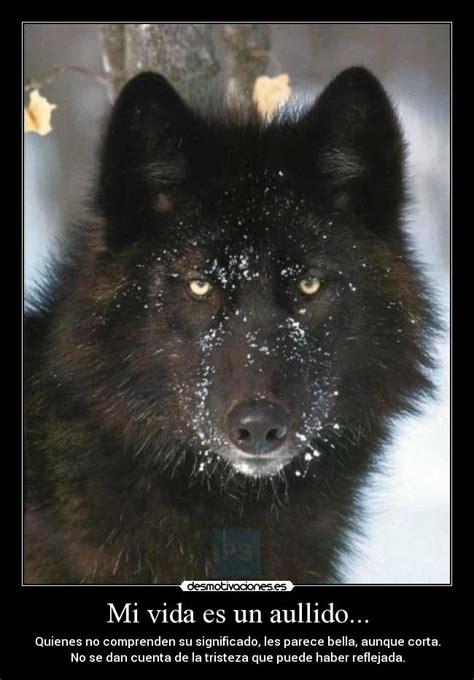 imagenes de lobos tristes mi vida es un aullido desmotivaciones