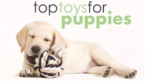 best toys for puppies best toys for puppies help them get out that energy herepup