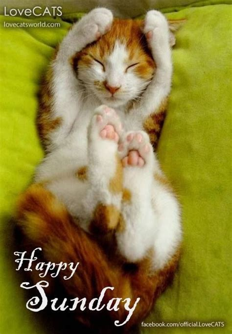 A Cat On A Sunday by Image Gallery Happy Sunday Cat