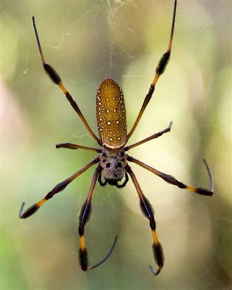 Marvelous Pictures Of Garden Spiders #3: P015_0_00_02.jpg