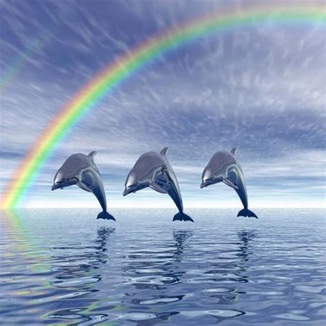 google images dolphins dolphins google search dolphins pinterest