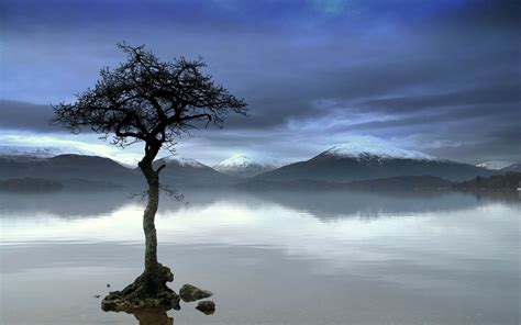 tree photography wallpapers lonely tree photography wallpapers