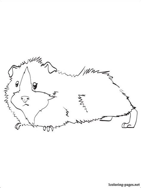 guinea pig coloring pages free printable guinea pig printable and coloring page coloring pages