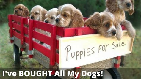 puppy selling should you adopt a or buy a puppy is it really cruel to buy a puppies