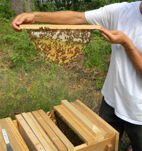 beekeeping top bar hive raising honey bees for beginners using top bar beehives