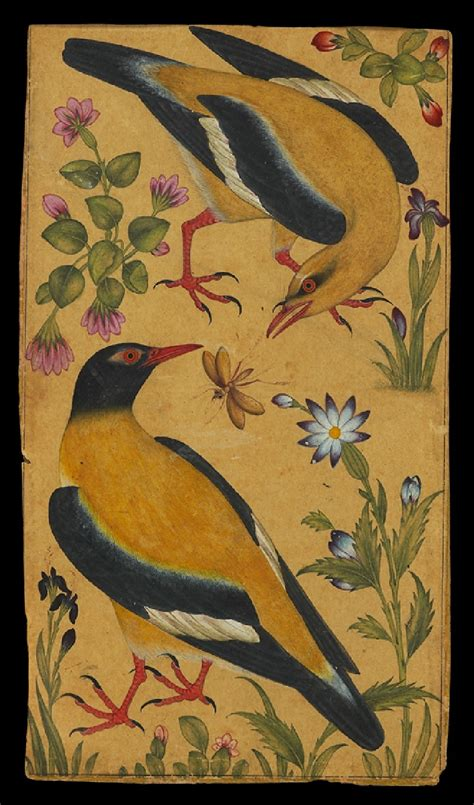 natural history painting eye burfi two orioles mughal north india c 1610 this