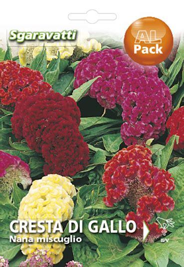 fiore cresta di gallo produzione e vendita cresta di gallo nana mix vasta