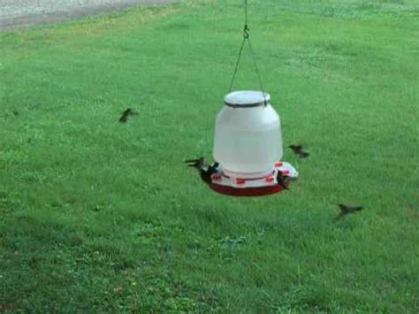 large one gallon 128oz hummingbird feeder youtube