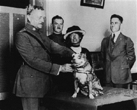 Sergeant Stubby Obituary New York Times The Most Decorated Earth In Transition