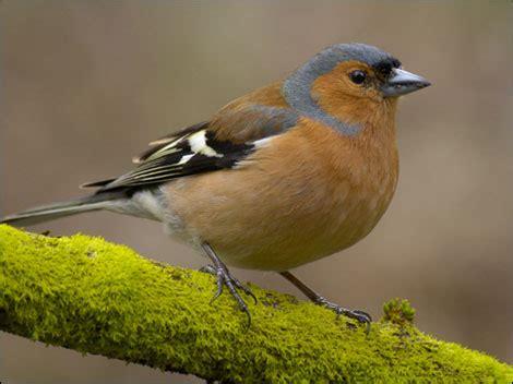 Garden Birds by Garden Birds Uk Animal