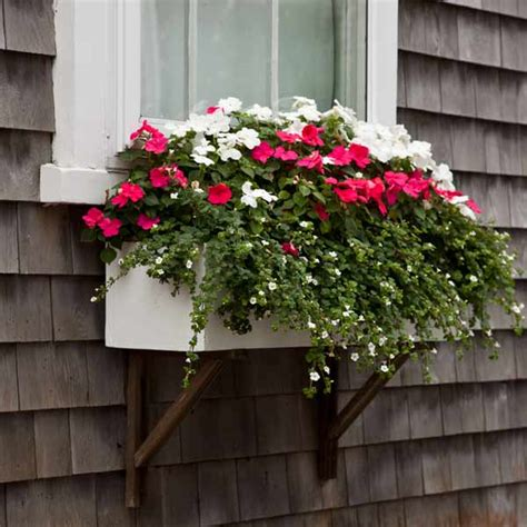plant window boxes still waters notes from a virginia shire window boxes