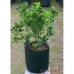 Planterbag 11 Liter Hijau No Handle harga planter bag 25 liter