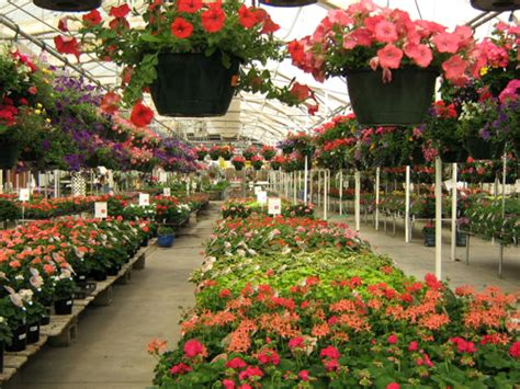 Tagawa Gardens Coupons by Annuals And Annual Flowers At Tagawa Gardens Nursery