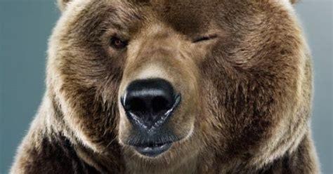 Happy Birthday Bear Meme