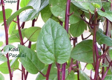 post  kitchen garden   grow organic