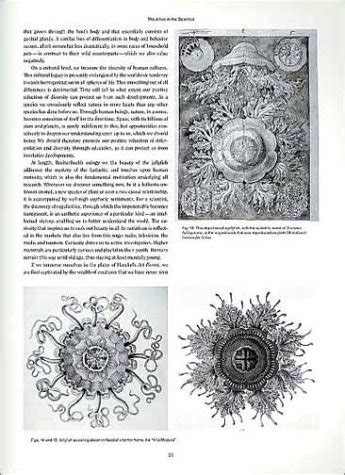 libro art forms from the libro art forms in nature the prints of ernst haeckel di ernst haeckel