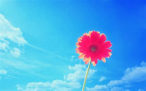 wallpaper flower video bright flowers wallpaper 2560x1600 78139