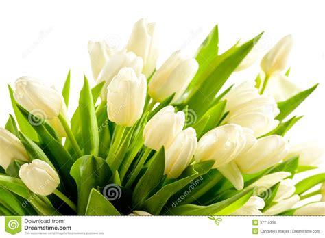 mazzo di fiori bianchi mazzo di fiori bianchi della molla dei tulipani immagine