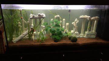 aquarium design eau chaude morte subite de poissons suite insertion 3 scalaires