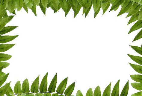 Wallpaper Gambar Pohon Dan Frame Photo gambar alam rumput cabang menanam tekstur daun