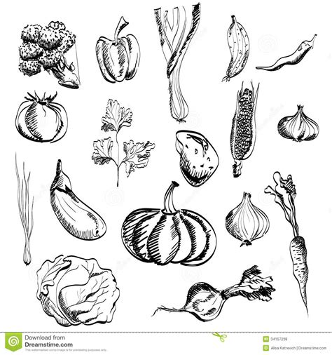 Drawing Vegetables by Vegetable Pencil And In Color Vegetable