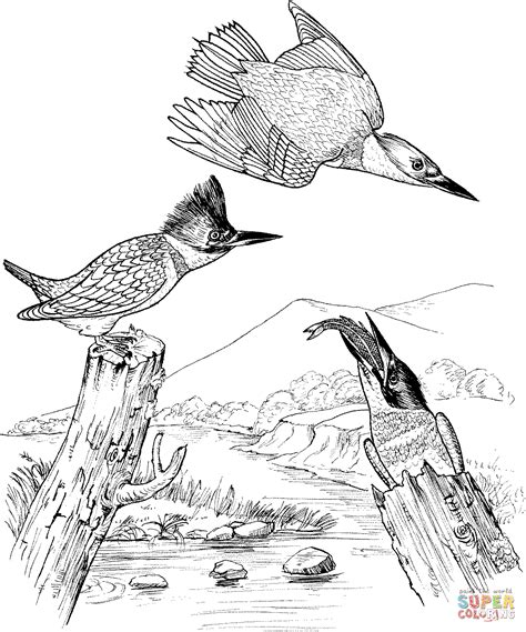 kingfisher coloring pages belted kingfisher birds coloring page free printable