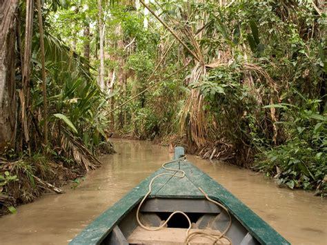 canopy amazon canopy amazon amazon nature tours paragon peru machu picchu and the amazon rainforest tour
