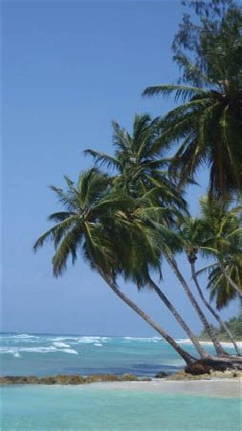 the most beatiful palm avenue 1000 images about barbados on pinterest villas islands