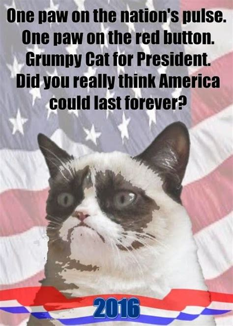 grumpy cat for president 2016 2194 best images about grumpy cat 4 president 2020 on