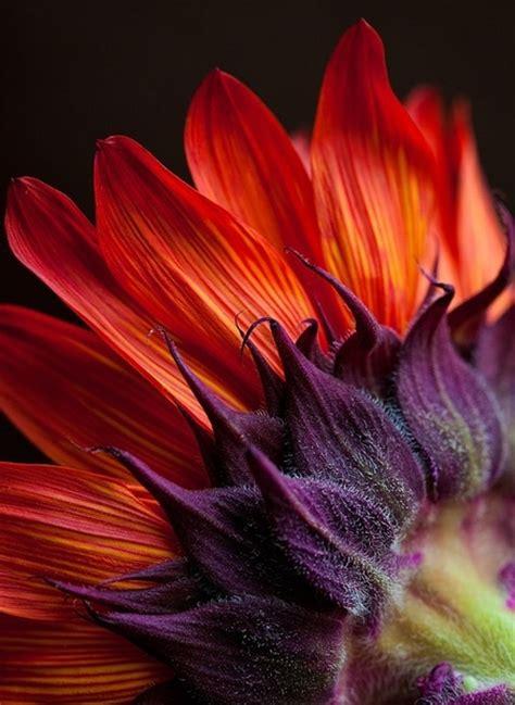 purple and orange color scheme 17 best images about orange purple color scheme on