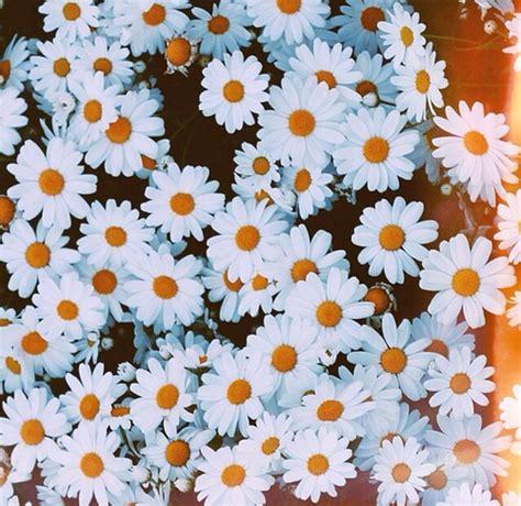 imagenes tumblr margaritas reblog