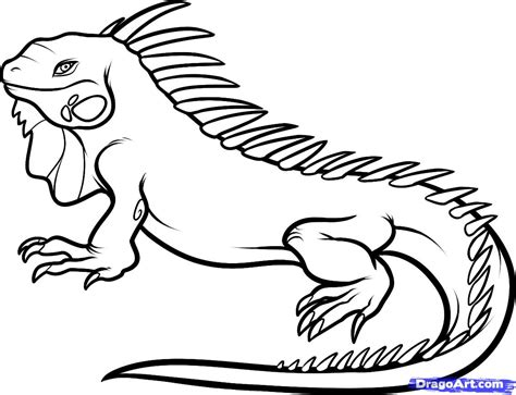 draw for free free coloring pages of iguana to draw