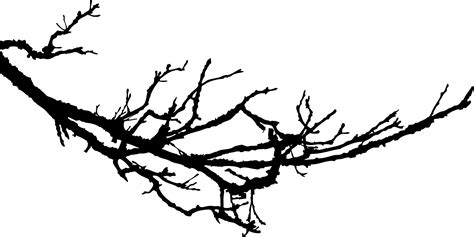 Tree Branch Wall Sticker picture of a tree branch free download clip art free