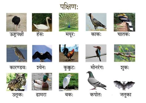 about birds in hindi language about birds in hindi language newhairstylesformen2014 com