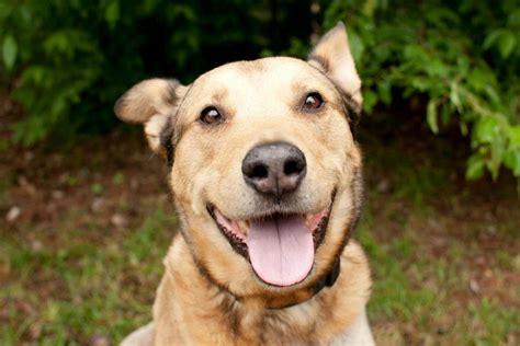 city dogs rescue derby city rescue home