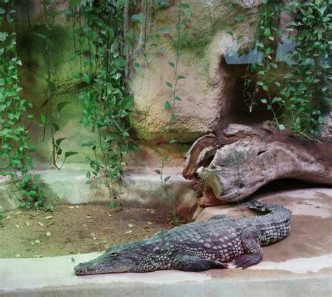 visit la m 233 nagerie a charming zoo in jardin des plantes