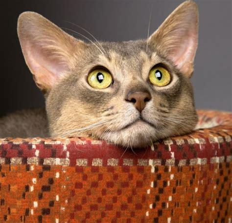 camas para gatos caseras 8 camas para gatos hechas en casa 161 gratis eroski consumer