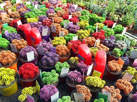 flower design malta flowers in piscopo gardens in burmarrad malta alyona