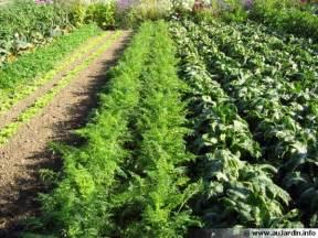 fiches jardinage du potager