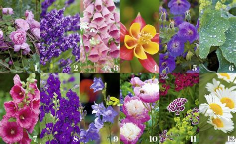 cottage garden plants how to create a cottage garden period living