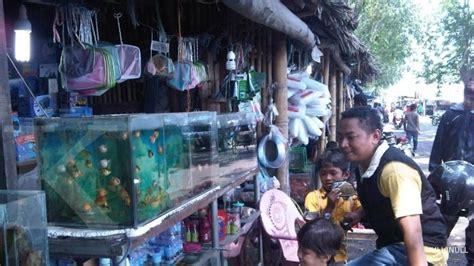 Lu Hias Aquarium perbanyak stok ikan hias tiap pekan 2