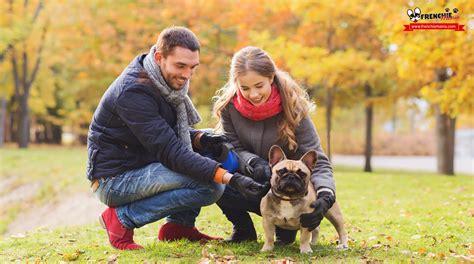 perros con personas 5 claves para entender el entre perros y personas