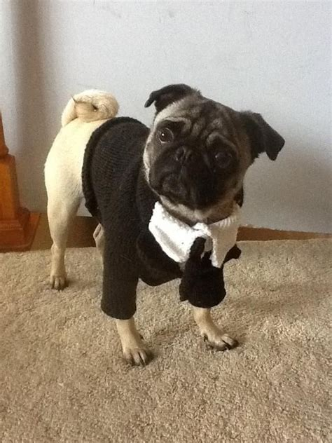 want to buy a pug 30 best images about pug knits and crochet on ravelry leg and