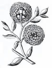 Vintage Flower Drawing - the vintage moth vintage floral clip art