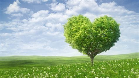 wallpaper love heart tree green landscape hd  love