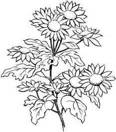 free printable flower coloring pages for adults free coloring pages of flowers