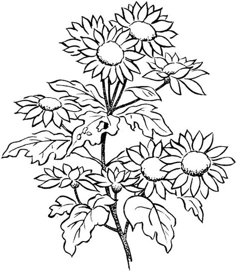 coloring pages printables flowers for adults free coloring pages of flowers